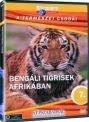 BENGÁLI TIGRISEK AFRIKÁBAN