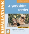 A YORKSHIRE TERRIER - KISÁLLATAINK